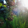 Unsere Garten (26. Juni 2018)