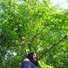 Walnussbaum im Garten Juni 2018