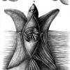 Marion Lucka: Fischvogel, Bleistift (2000)